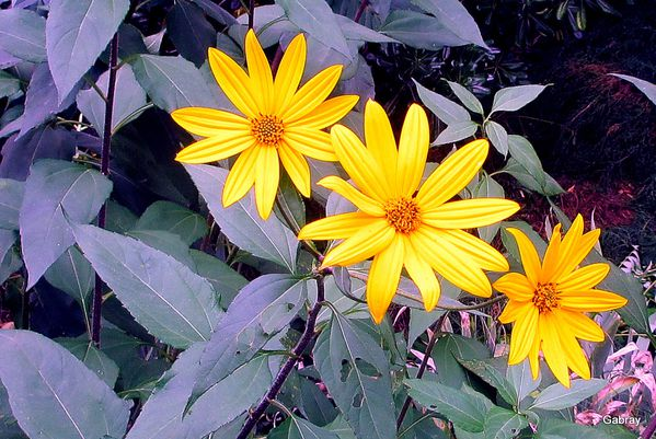 y04 - fleurs jaunes