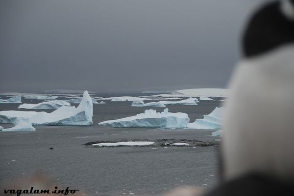 Antarctique3 0335
