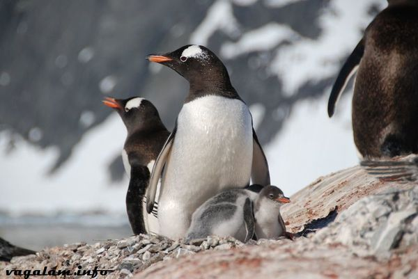 Antarctique3 0361 6