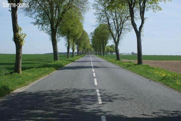 route boisée