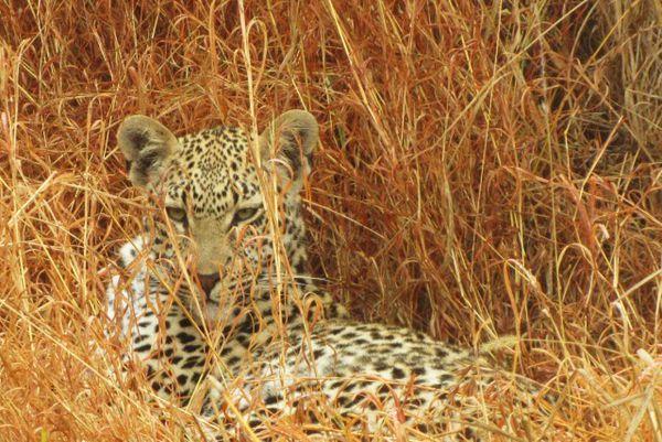 Africa del Su. Sabie Sand. Parque Kruger10