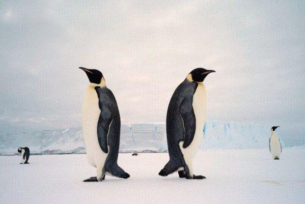 Antartica 2010-7