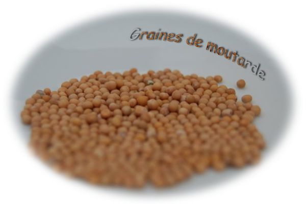 graines-de-moutarde.jpg