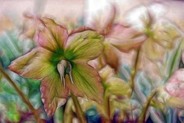 lm_flowers.jpg