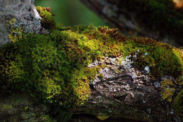 lichenmousse.jpg