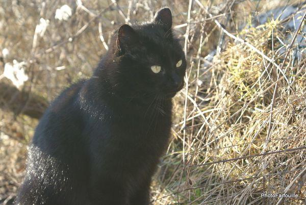 photofarfouille chats (21)