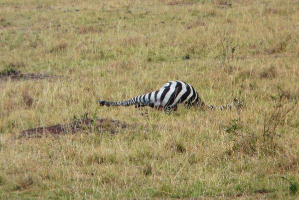 Maasai Mara 8