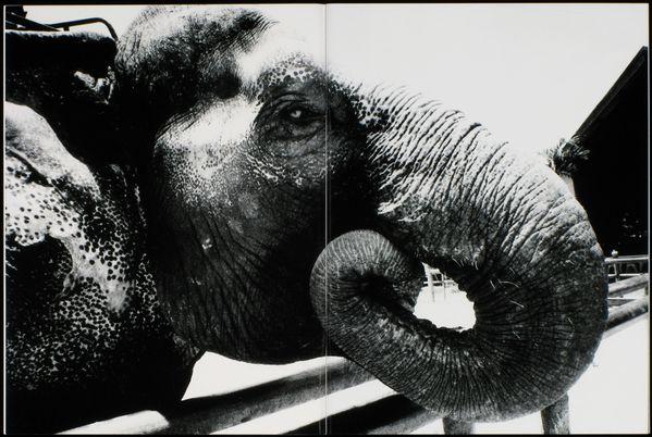 daido moriyama elephant