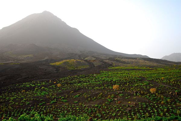 vignoble-with-the-volcan---www.vinhamariachaves.eu.jpg