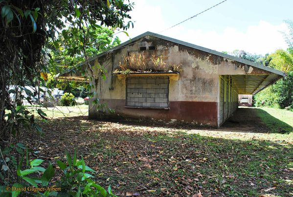 ecole-tracee-trinite-martinique
