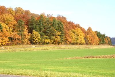 pagny-le-jure-automne1.jpg