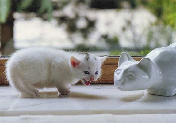 chat-et-porcelaine.jpg