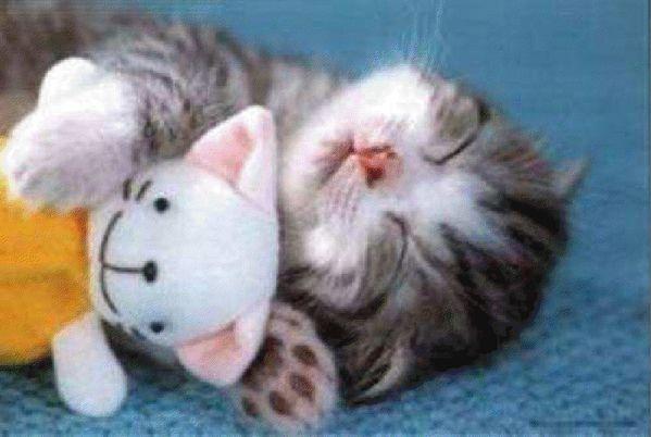 chaton-et-nounours.jpg