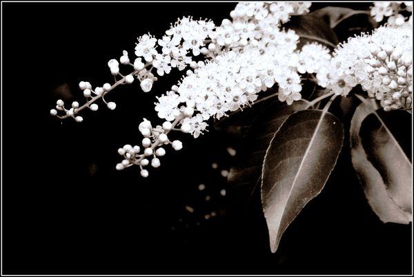 12_06_03_noirblanc3.jpg