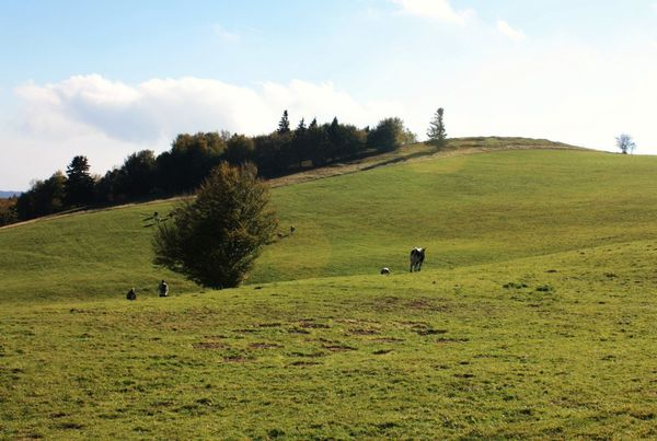 Grand-Ballon 1149 (FILEminimizer)