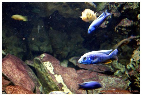 Musée Aquarium Paris Porte dorée