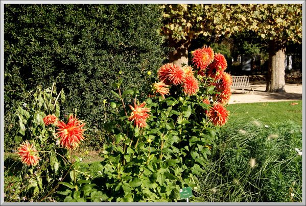 Jardin-des-Plantes-oct--8-.JPG