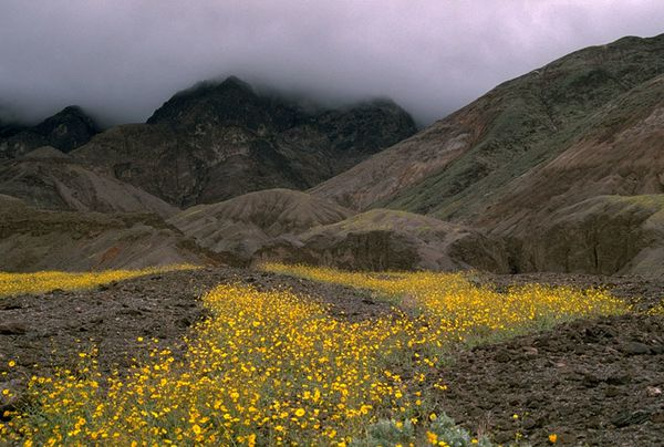 Printemps-a-Death-Valley.jpg