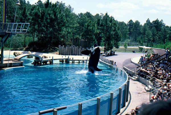 1978-Orques Disney Floride (6)
