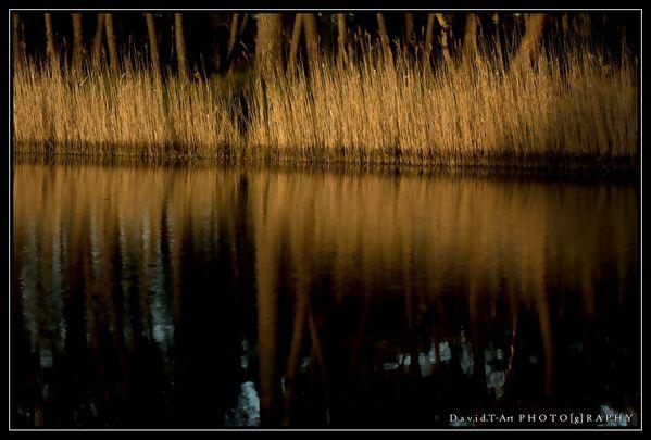 herbes et reflets