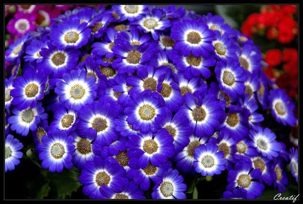 fleurs--fruits---comestibles-v2-5947.jpg