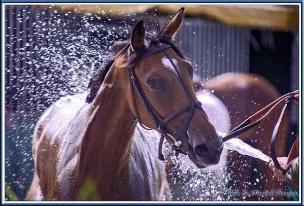 cheval-02.jpg