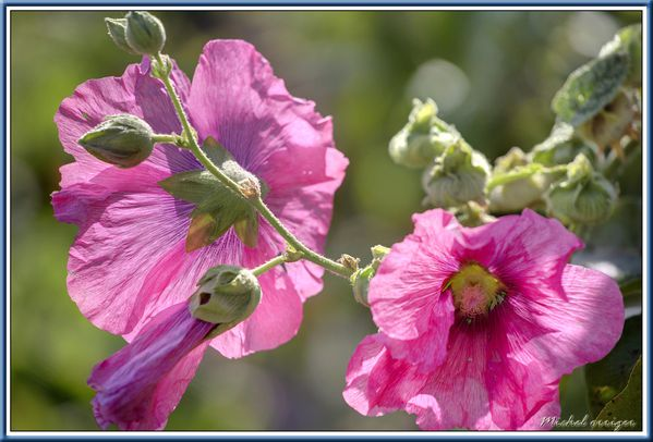 fleur-0201.jpg