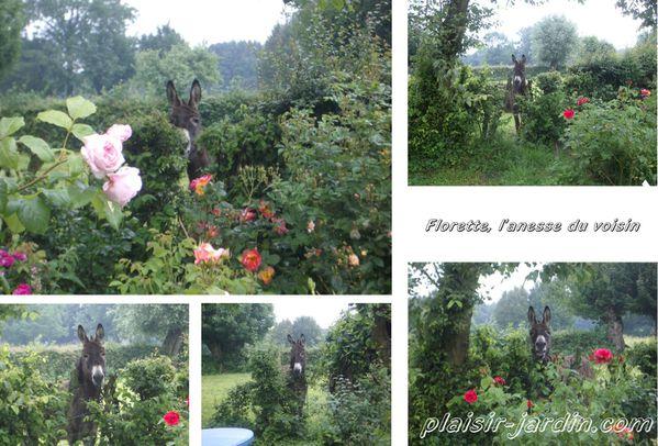florette-2.jpg