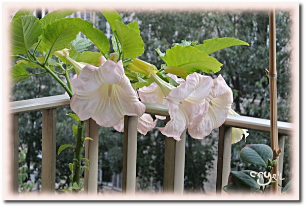 balcon-fleurs-10-2012-2.jpeg