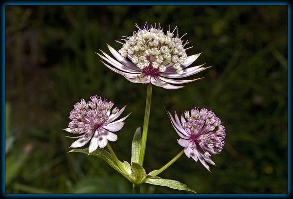 Fleur-006.jpg