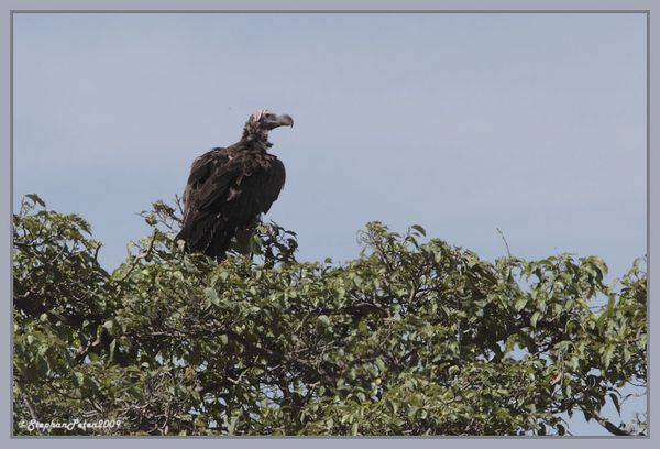 VautouroricouNgorongoro.5.11-09.jpg