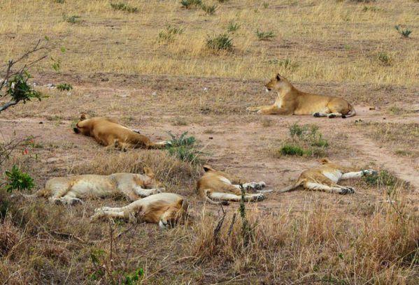 Maasai Mara 19