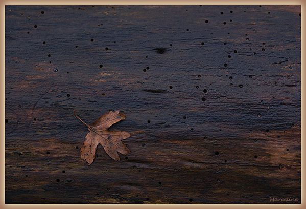 feuille-tombee-1