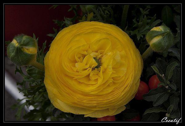 fleurs--fruits---comestibles-v2-6907.jpg