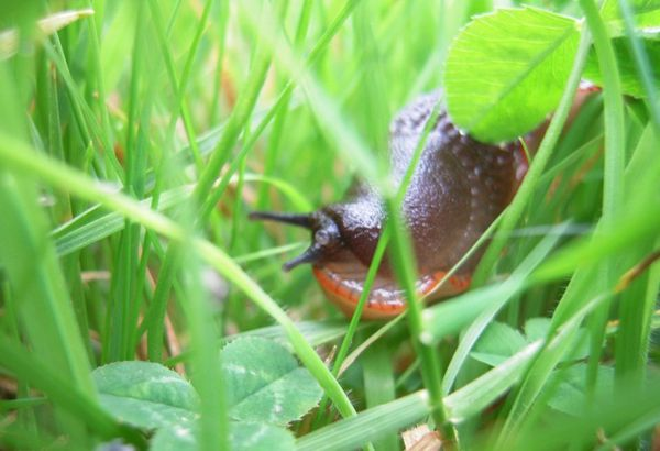 une limace se prélasse