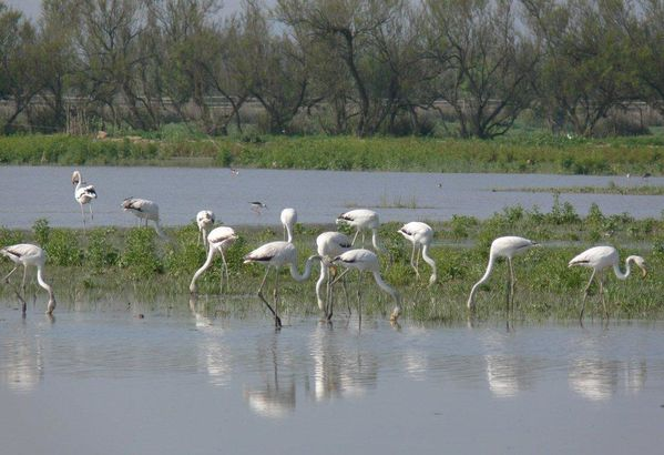 Groupe-flamants-roses.jpg