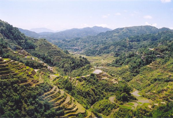 Rice_Terraces_Banaue.jpg