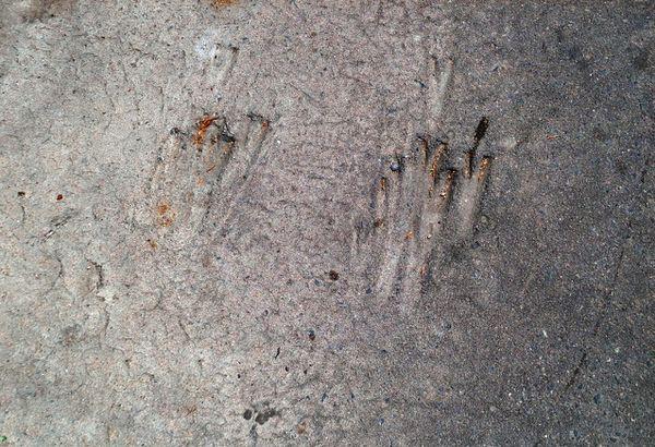 pattes-d-oiseau-dans-le-bitume-rue-stanislas-baudry.jpg