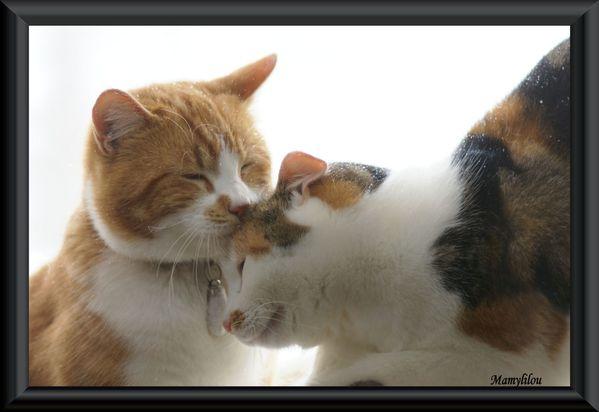20091219 155 Amour de chats
