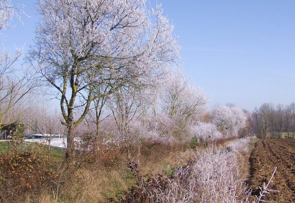 20100131 arbres-givres 012 (bl)