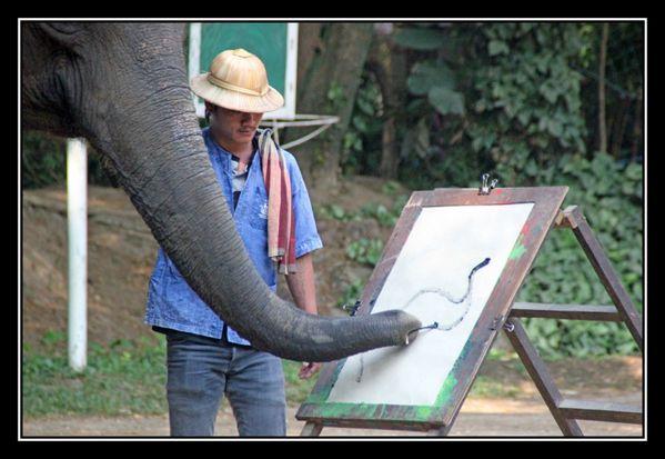 P11 Elephant Asie