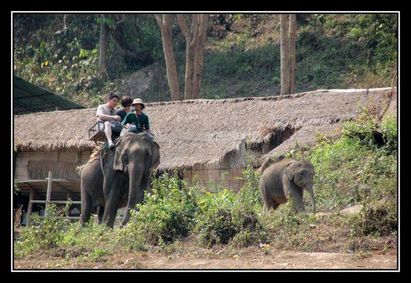 P21 Elephant Asie