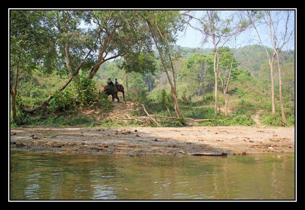 O23 ElephantAsie