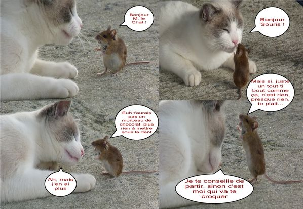 Chats et souris - Photo chat marrant ...