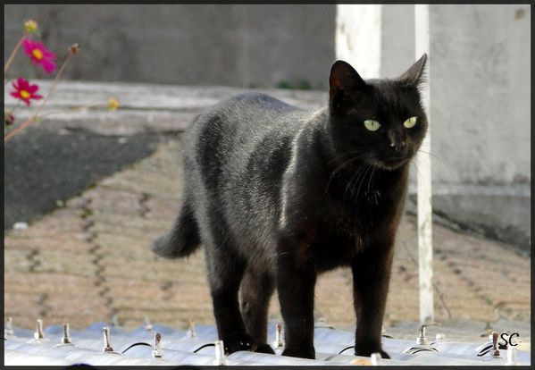 chat-38