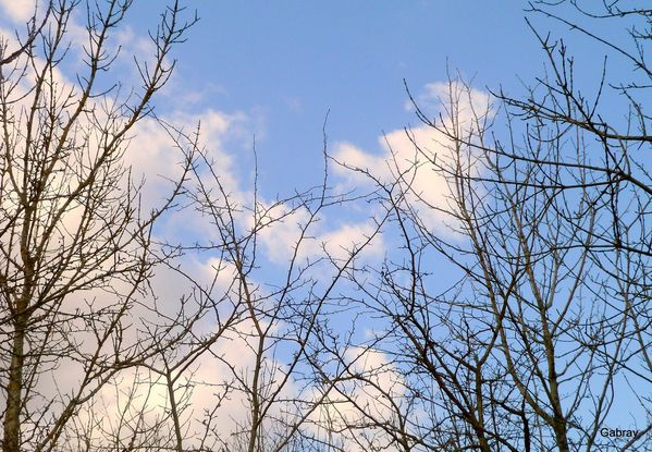 x07 - Nuages & branches