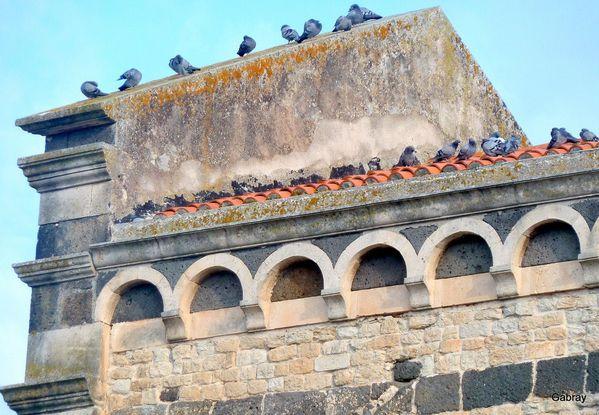 T10 - Pigeons