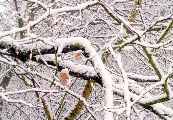 s04 - Branches et neige