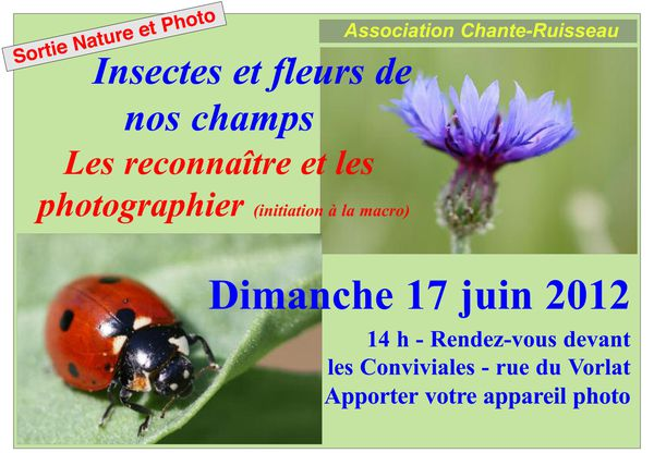 sortie-insectes-2012-coul-3.jpg