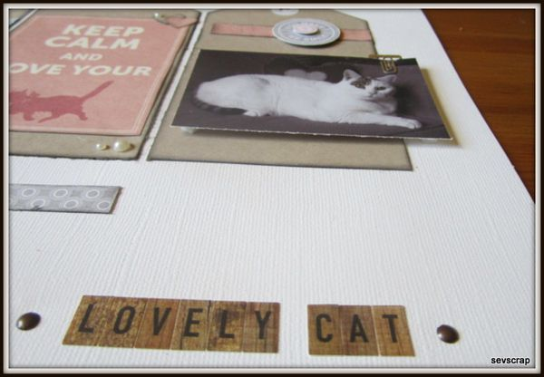 lovely-cat-005.jpg